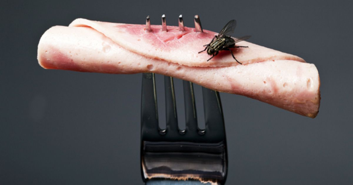 The Gross Truth About Flies In Your Food