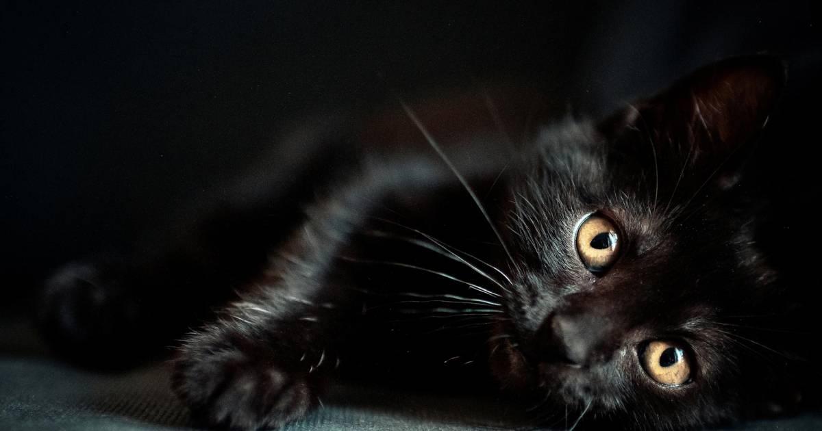 7 Ways Black Cats Bring Good Luck Around the World