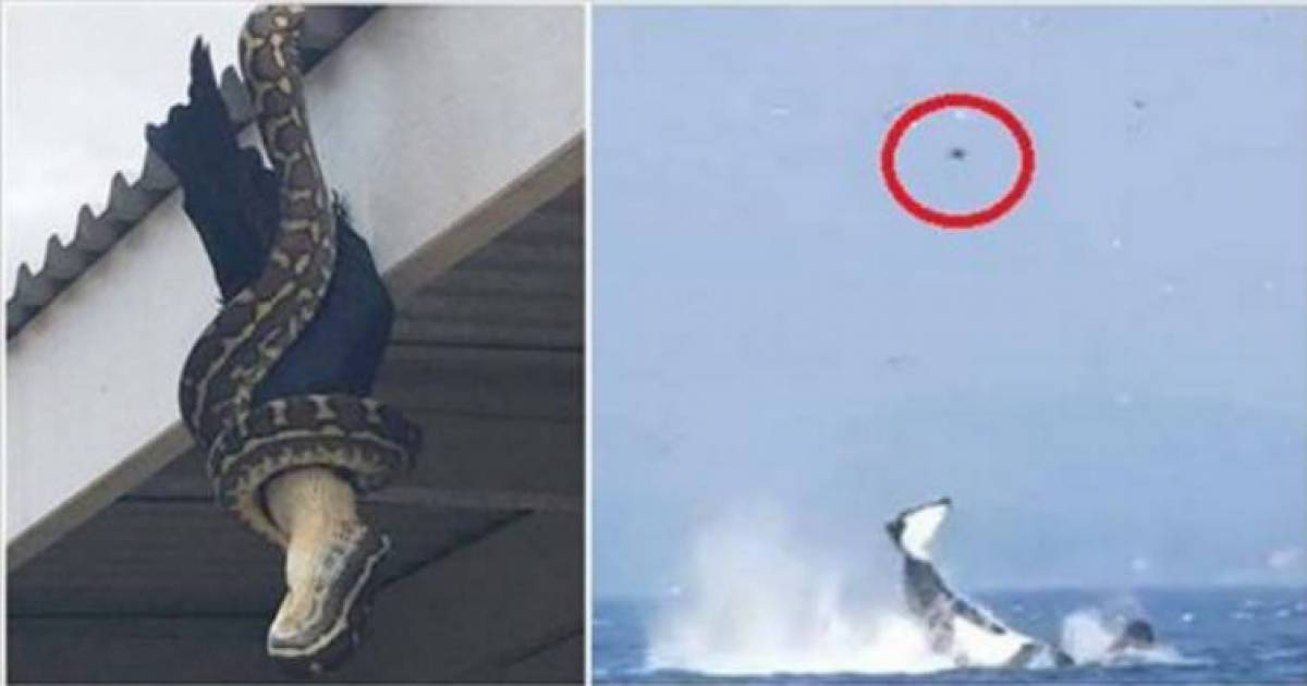 These 7 Pictures Shows How Scary Nature Can Be