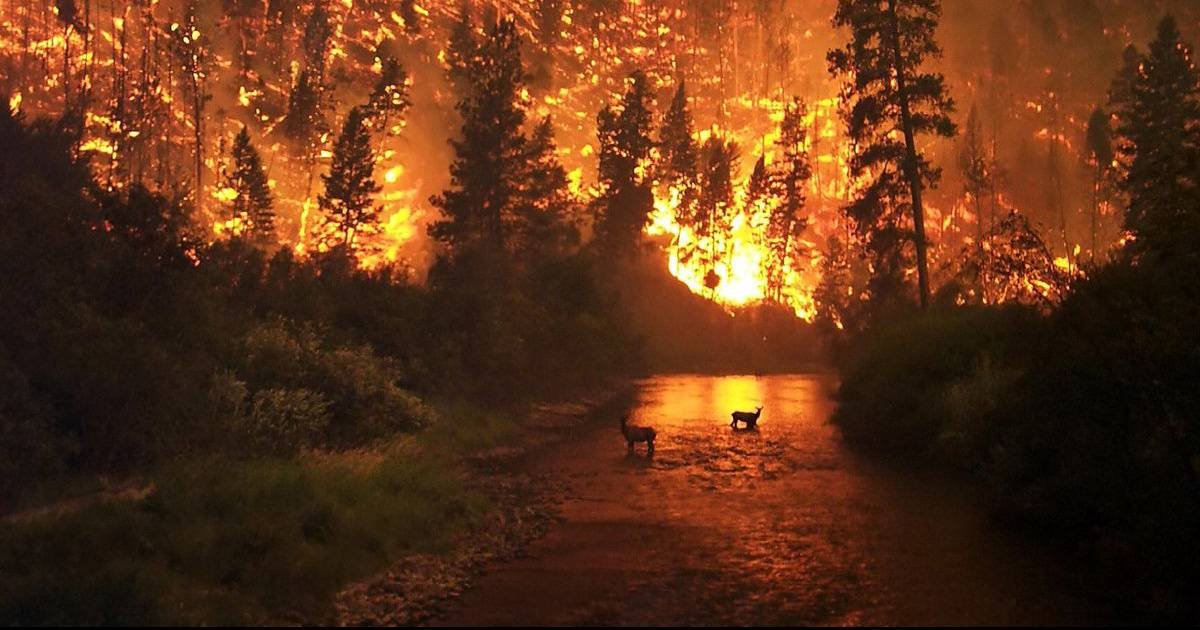 Families Displaced By The Tennessee Wild Fires Will Get Help For 6 Months.