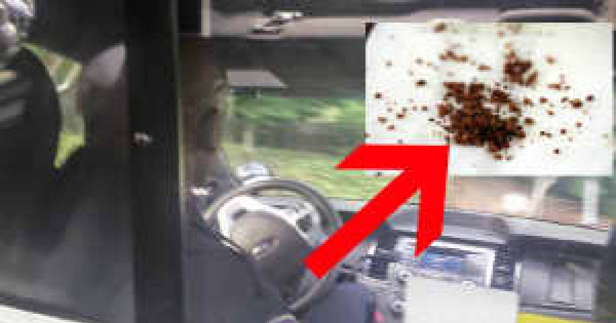 Man Arrested With Millions Of Donut Crumbs In His Car. Cops Thought It Was Actually Meth