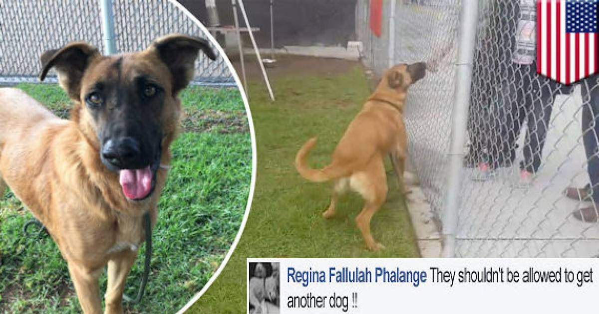 Abandoned Dog Excited To Meet Her Family In A Shelter, But They're There To Adopt Another Dog Instead