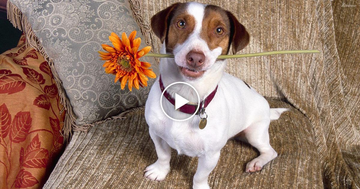 Top 5 Discipline Dogs Videos Compilation