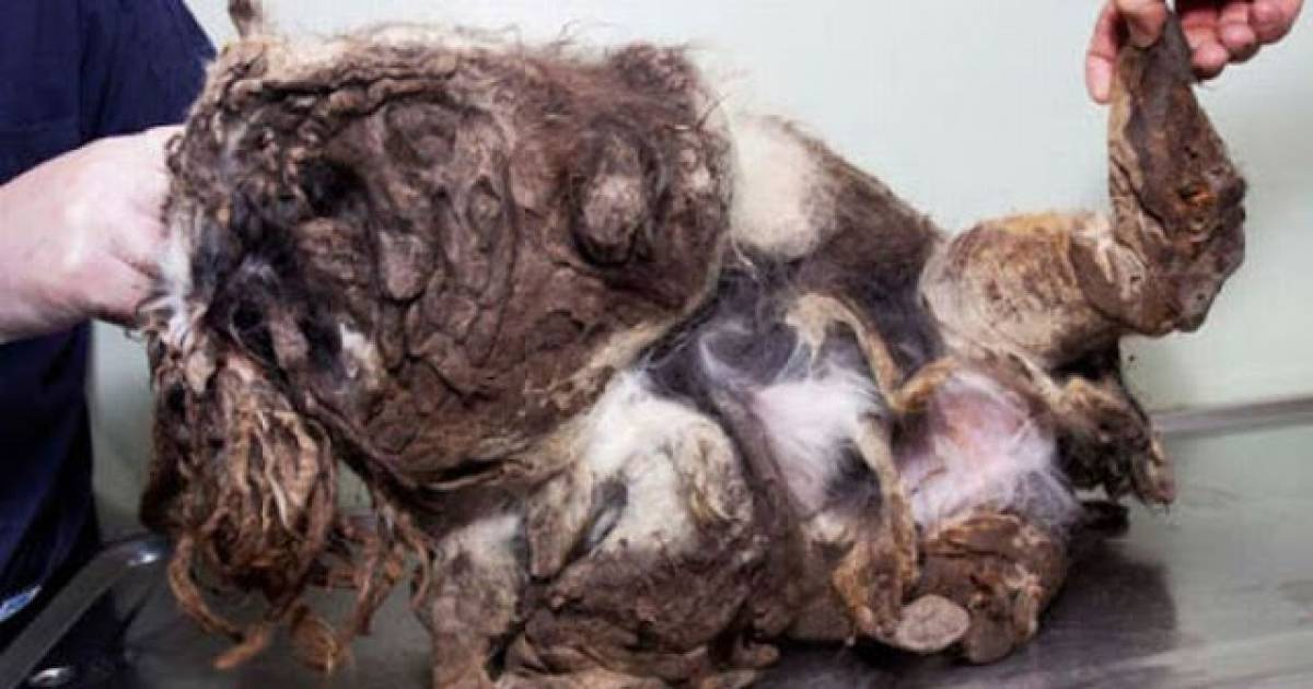 A Passerby Thought He Was A Pile Of Trash. I Have Never Seen Such A Shocking Transformation.