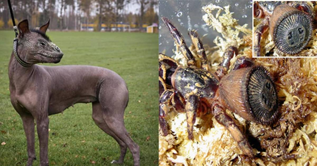 Real-Life Animals That Are More Like Nightmares