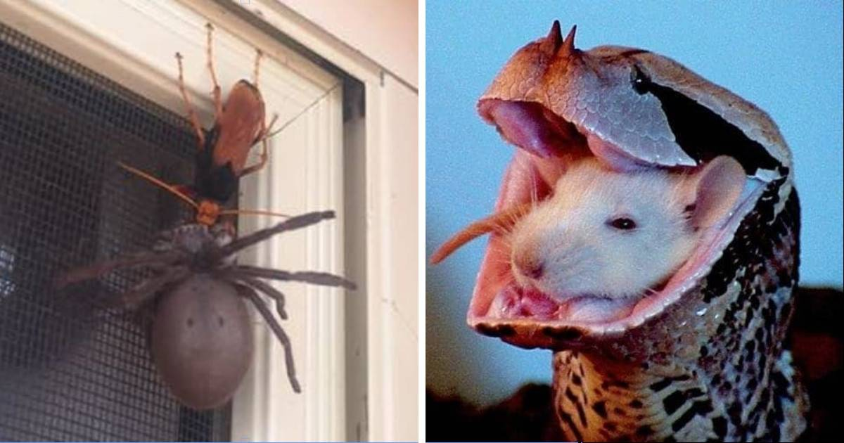 10 Pictures That Show Just How Terrifying Nature Really Is