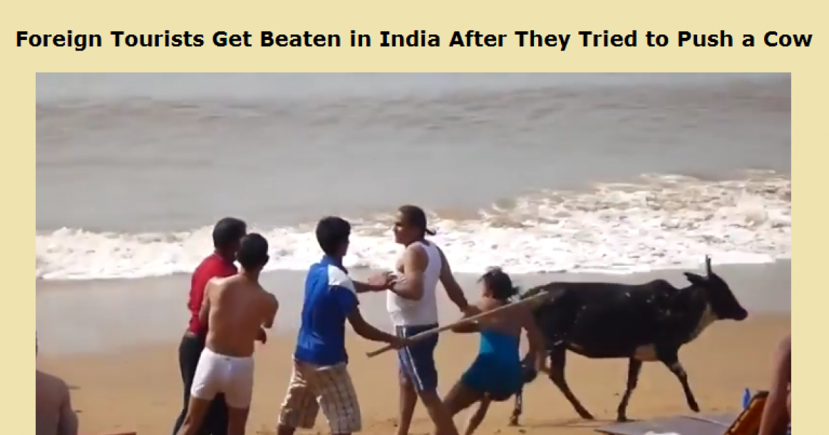 Foreign Tourists Get Beaten In India After They Tried To Push A Cow