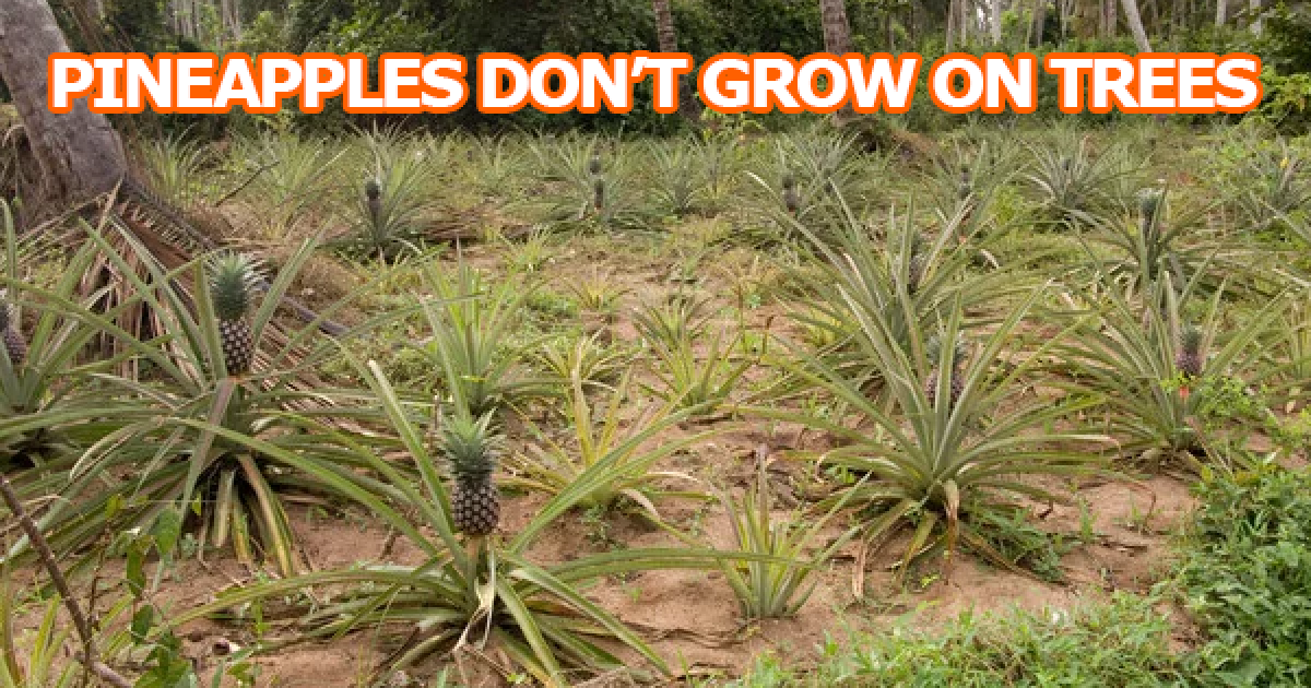 20 Photos That Prove Your Entire Life Is A Lie