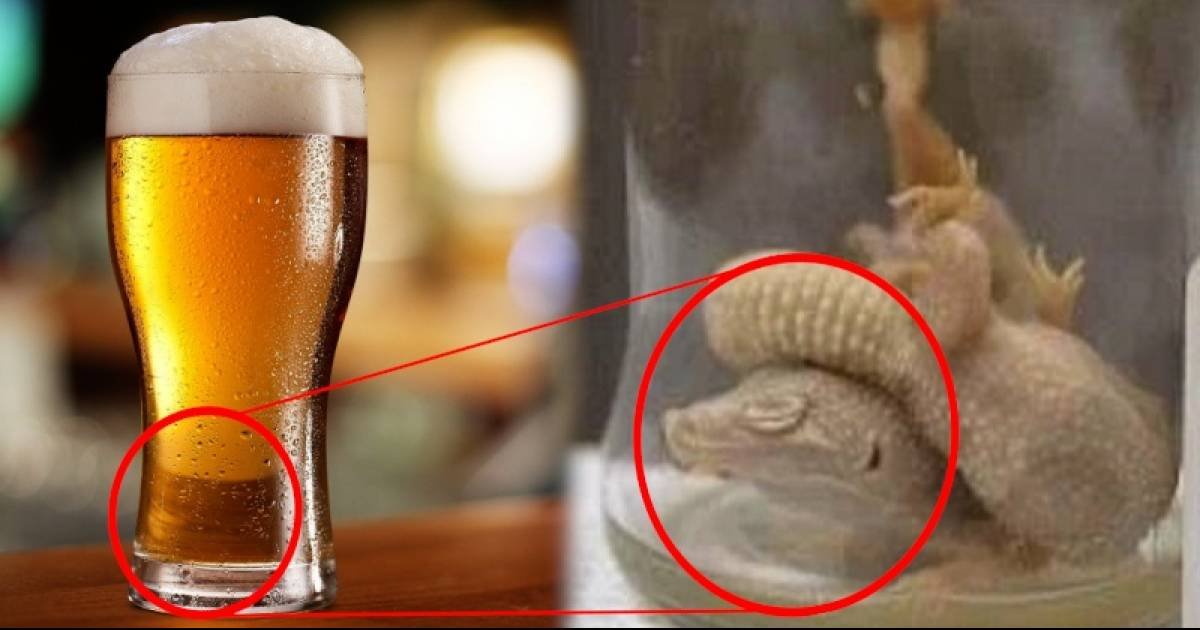 Man Becomes Ill After Drinking Popular Beer With DEAD Geckos Inside!
