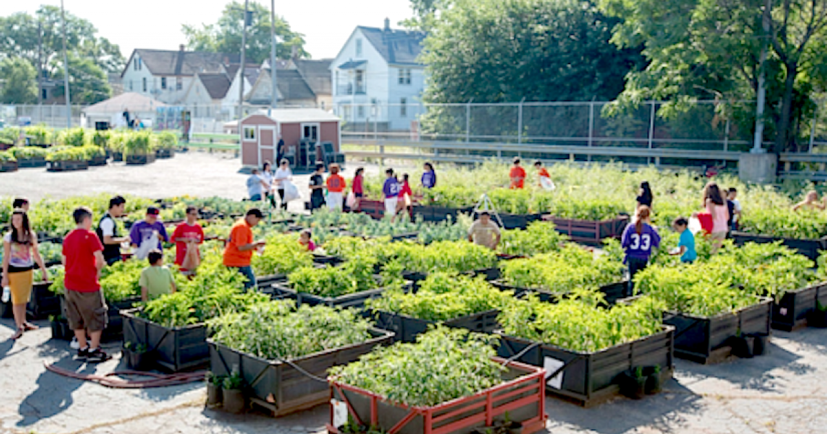 The Future Of Urban Farms Or Community Gardens Are They One And The Same?