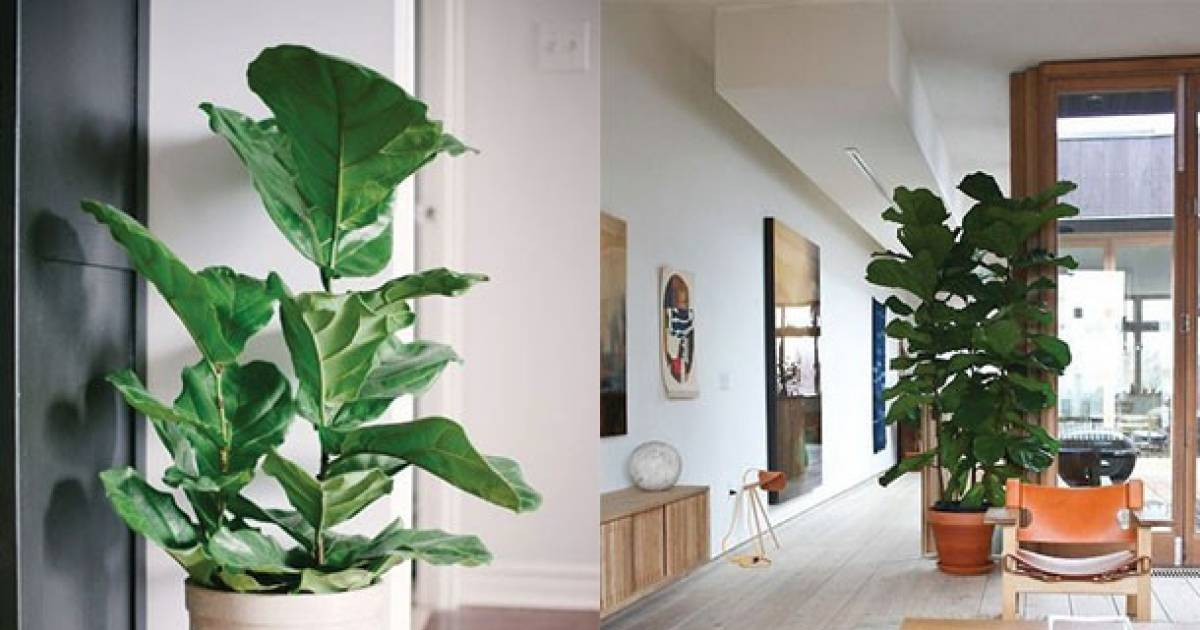 The Benefits Of Having A Plant At Home