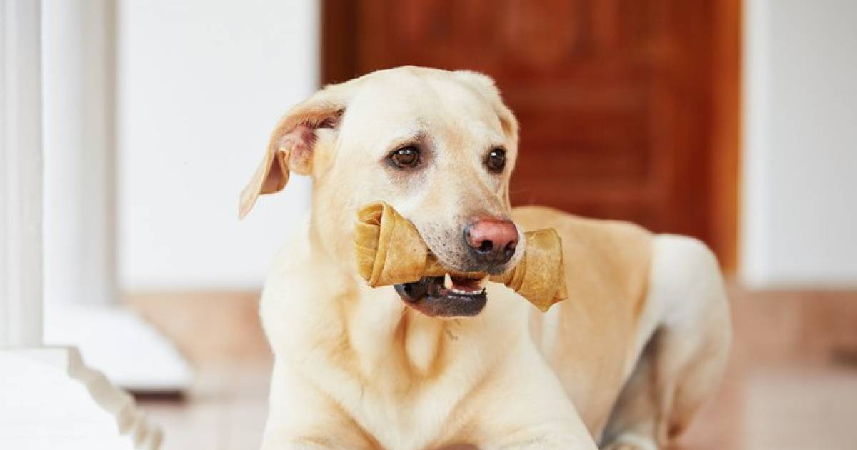 Dog Bone Treats Could Be Deadly, FDA Warns