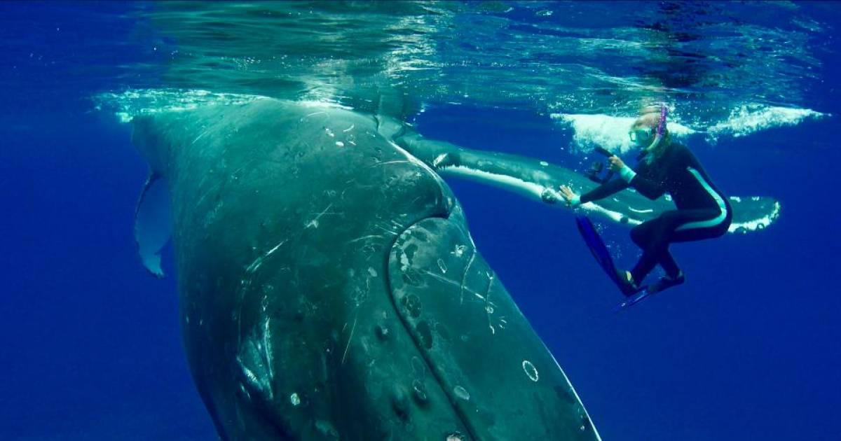 Whale Protects Diver From Approaching Shark In Amazing Video