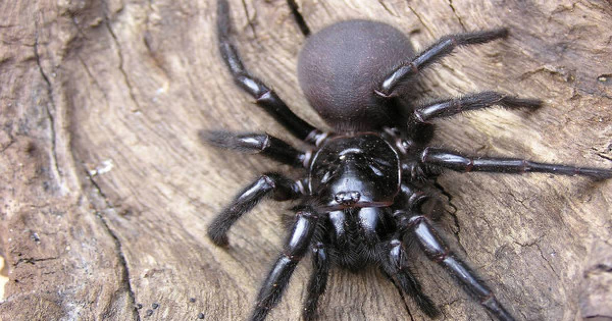 Ten-Year-Old Boy Survives A Bite From One Of The World's Most Deadliest Spiders