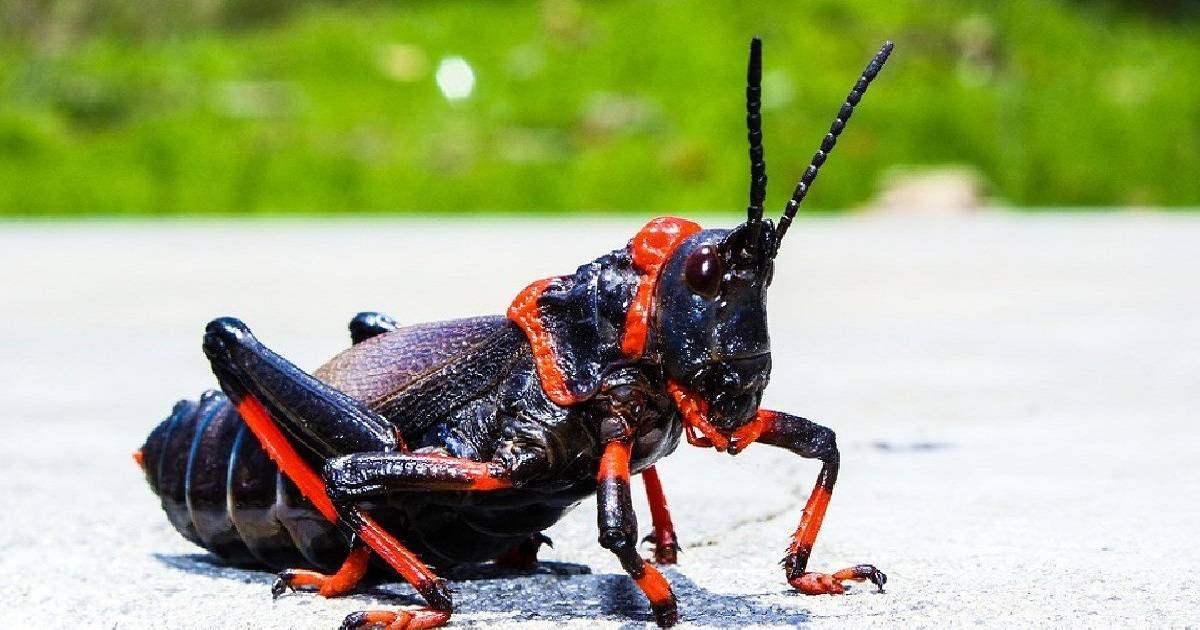 50 Shades Of Wrong: Disturbing Insect Mating Rituals