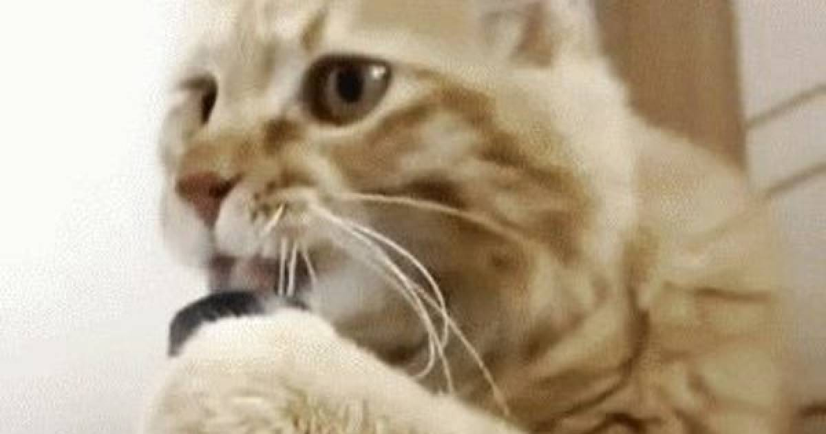 Funny Cat Gifs Because Who Doesn't Love A Little Furball.