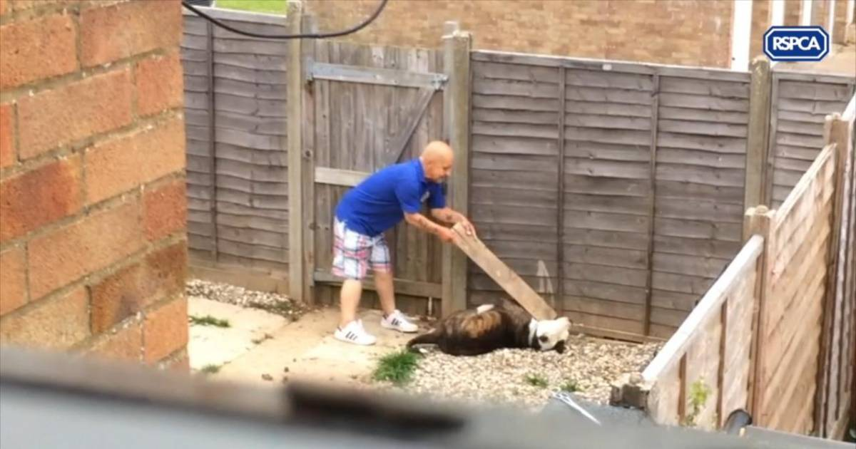 Heartbreaking Video Shows Man Abusing Friend's Bulldog With Plank Of Wood