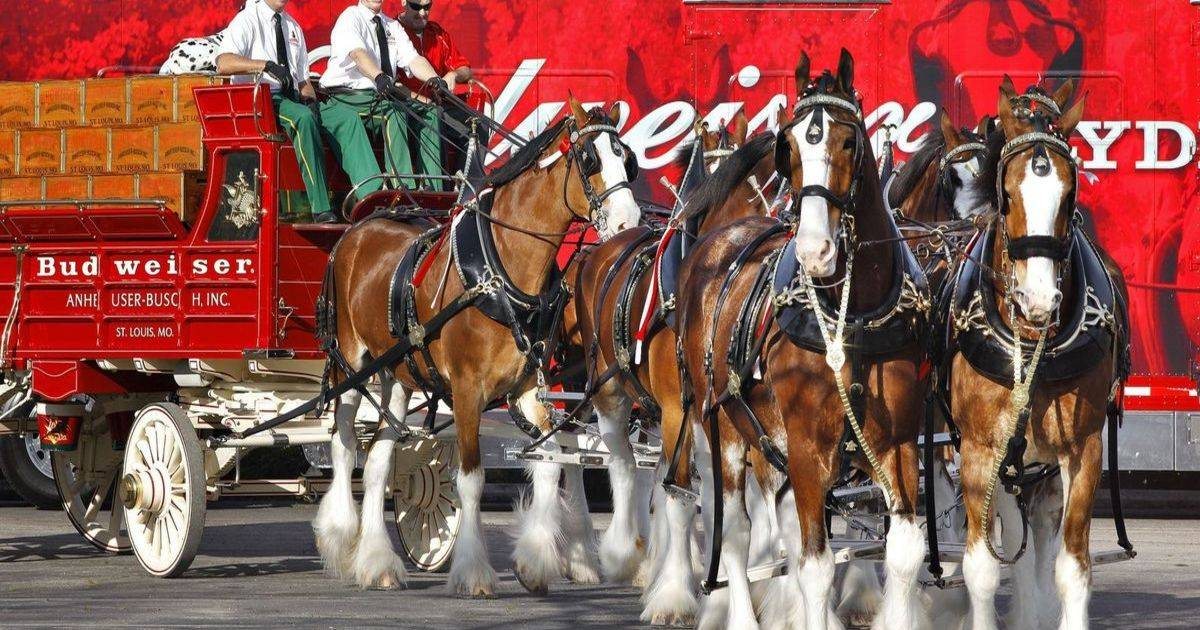 Check Out Our Top Ten Favorite Budweiser Clydesdale Commercials