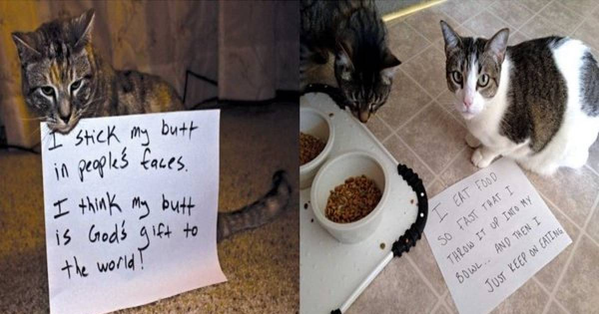 Cats Are Real Jerks, And These Photos Prove It