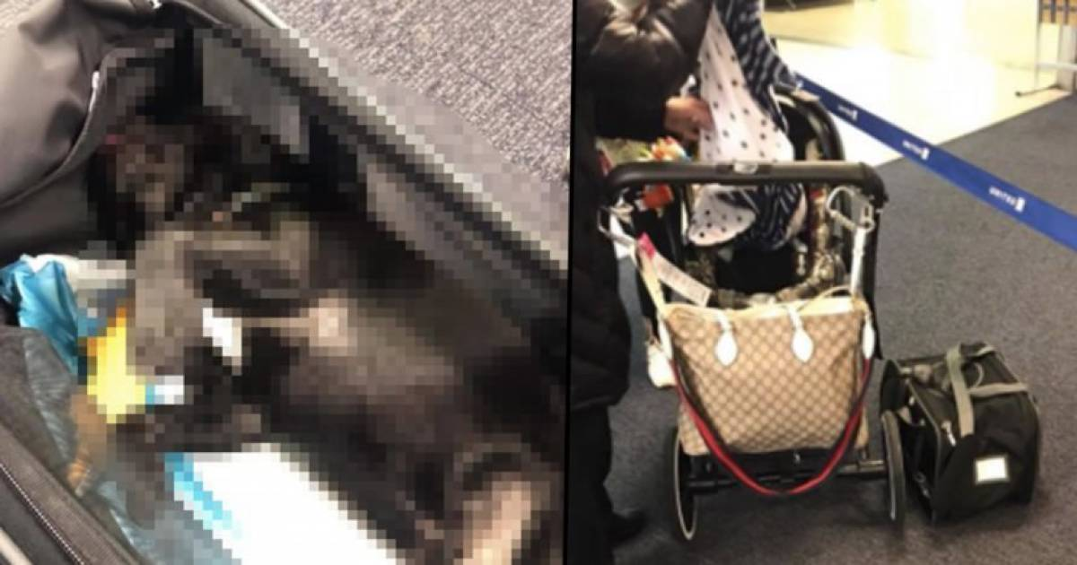 Dog Found Dead After Flight Attendant Stuffed It Into Overhead Storage On United Airlines Flight