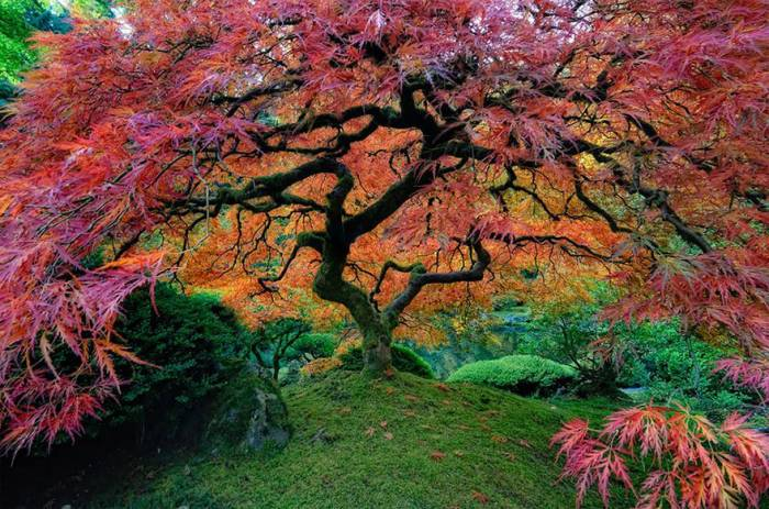 Most Amazing trees around the globe 94895-large-499415