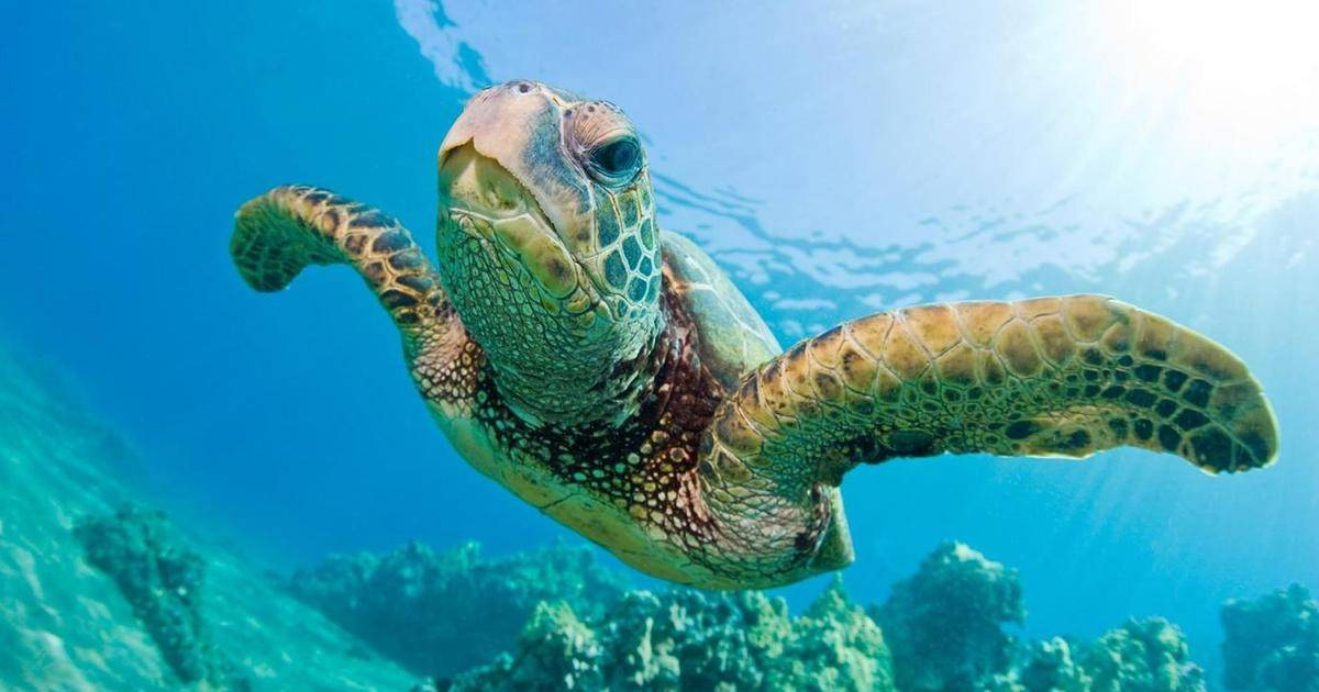 Check Out These Super Cool Turtles From Around The World