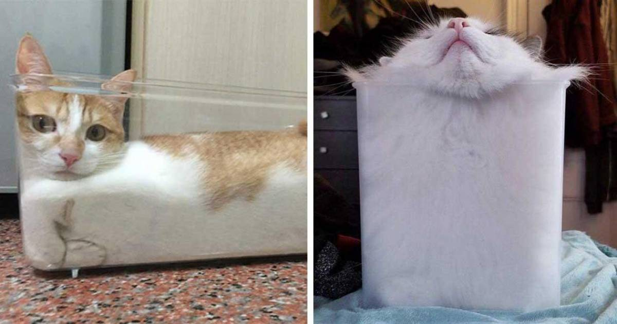 Cats Are Unique Because They Are Solid And Liquid At The Same Time
