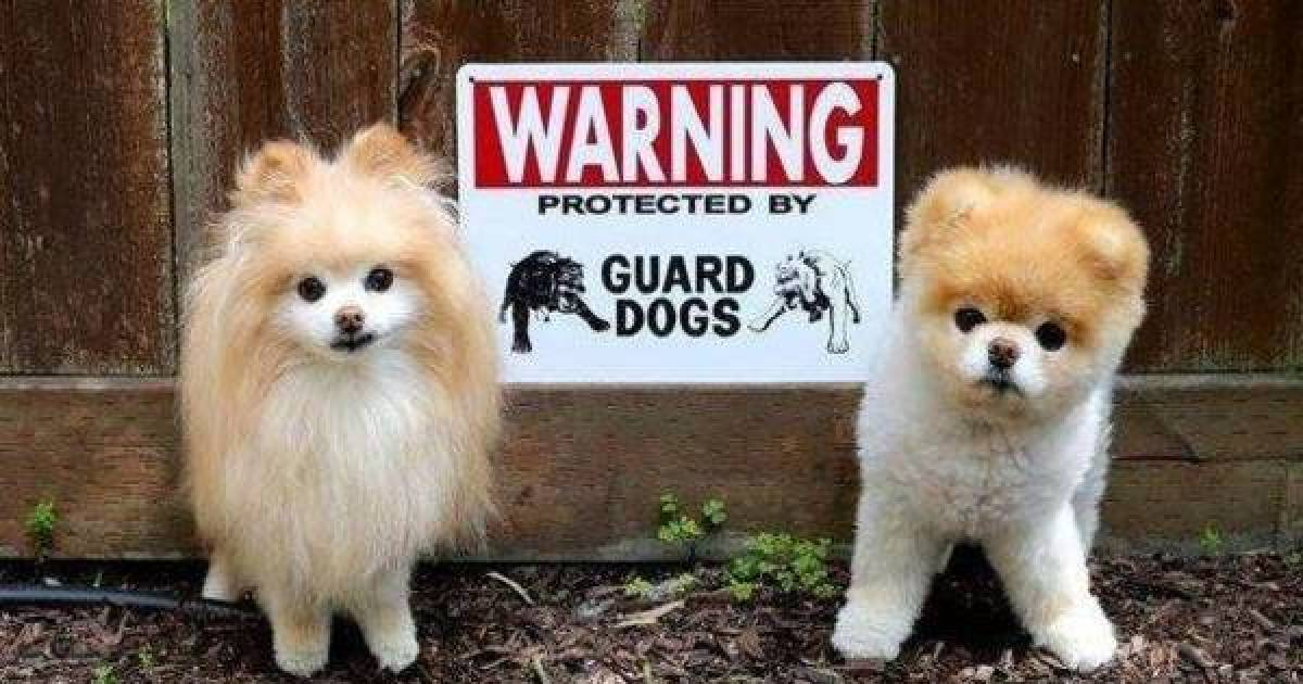 These Adorable Beware Of Dog Signs Show You Have Nothing To Fear