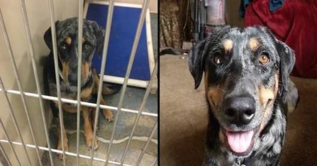 Check Out These Heartbreaking Before And Heartwarming After Photos Of Animals Adopted From Shelters