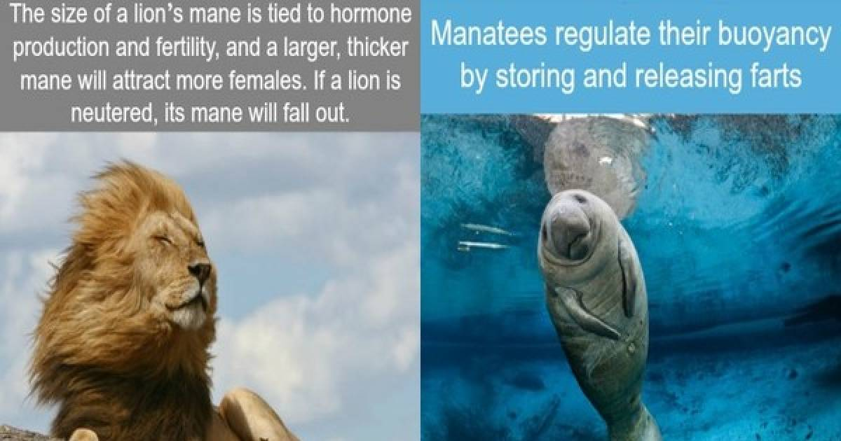 Amazing Facts For The Animal Lovers Out There