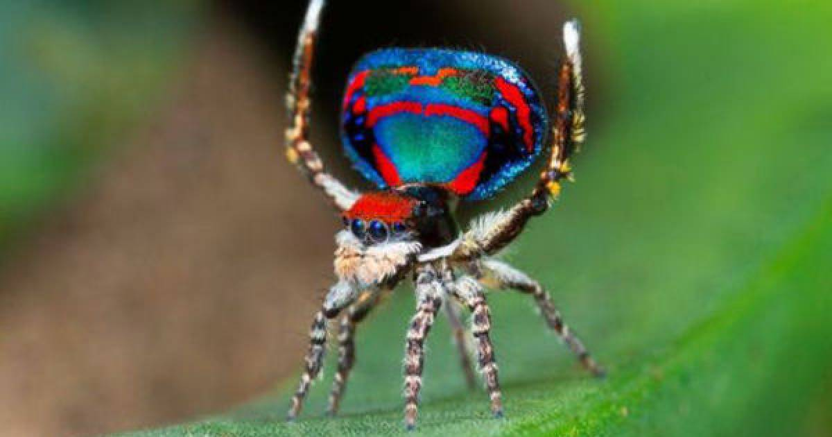 Here Are Some Of The Most Beautiful Spiders From Around The World