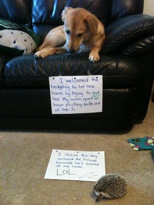 Favorite dog shaming, ever.