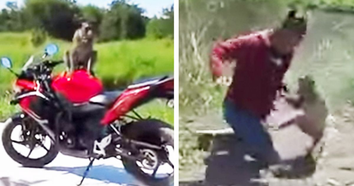 Guy Fist Fights This Monkey After Hitting It With A Shoe