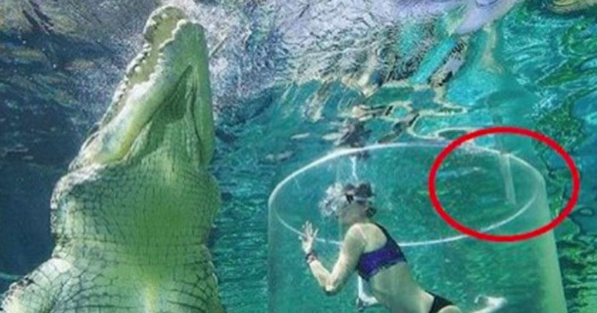 A Woman Is Lowered Down Into A Crocodile Tank–What Happens Next? TERRIFYING!