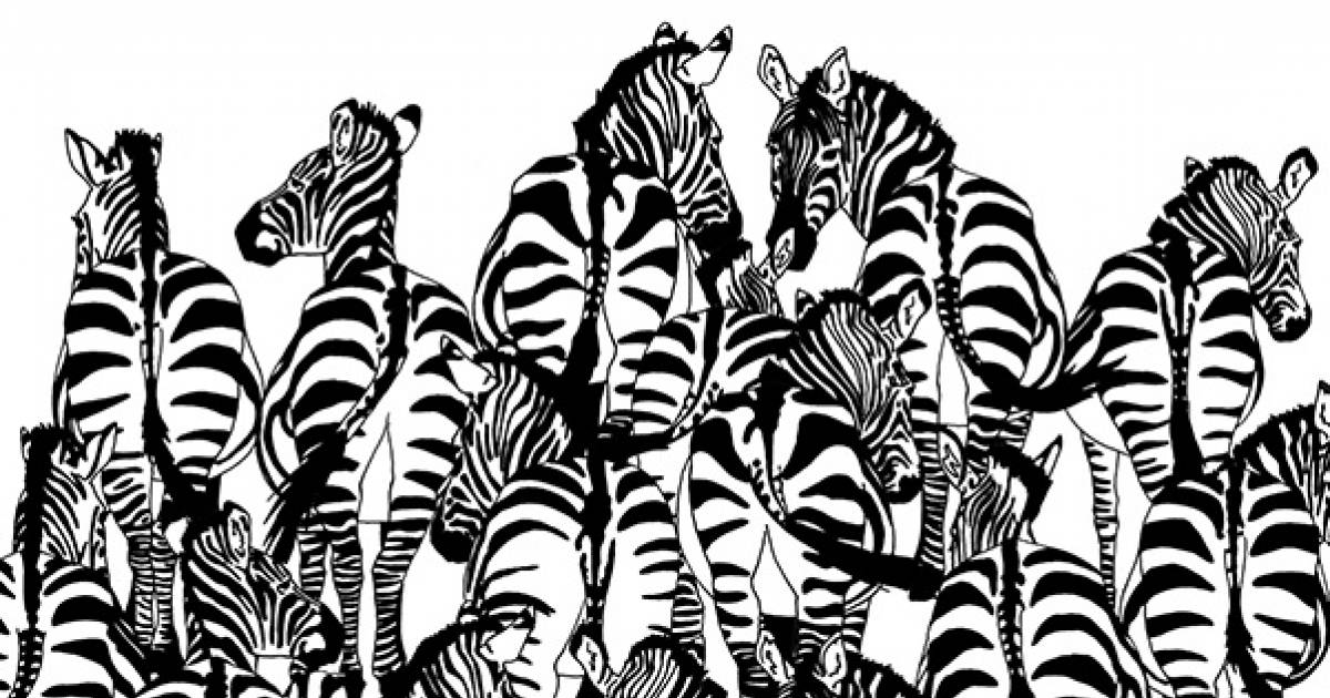 Can You Spot The Badger Hiding Among The Zebras? It's Not Easy.