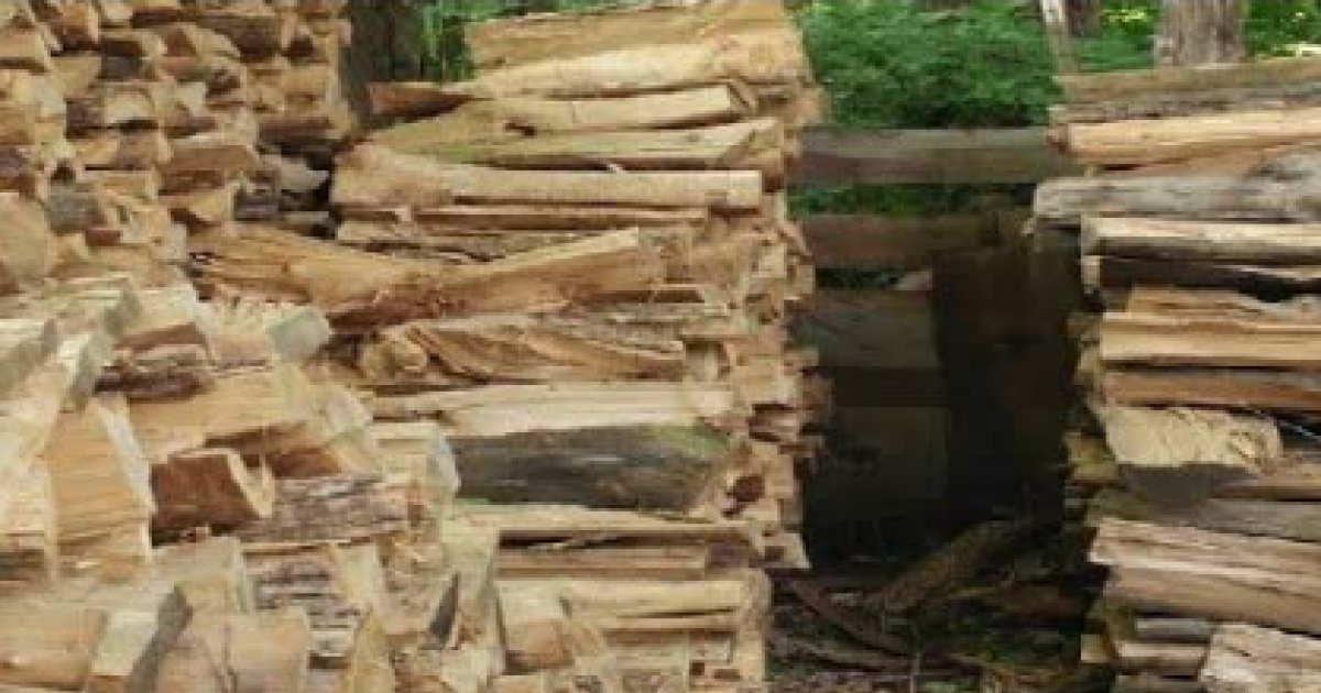 There's A Cat Hiding Somewhere In These Logs But Not Everyone Spots It - Can You?