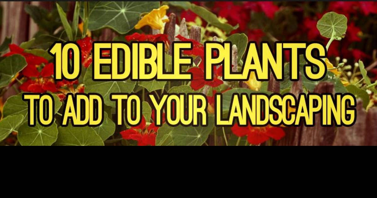 10 Edible Plants That Are Probably In Your Yard Right Now