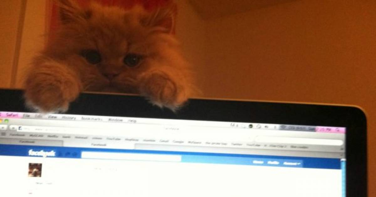 These 30 Pets Want You To Get Off Of That Computer Right NOW