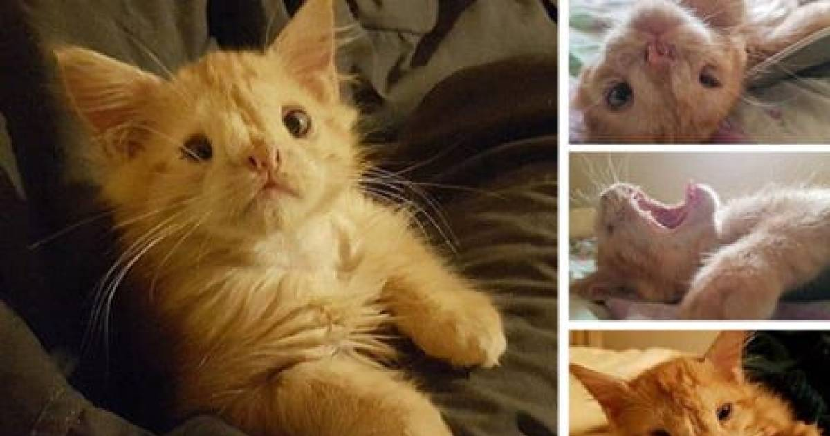The Kitten Who Is Too Ugly To Be Loved Couldn't Find A Home