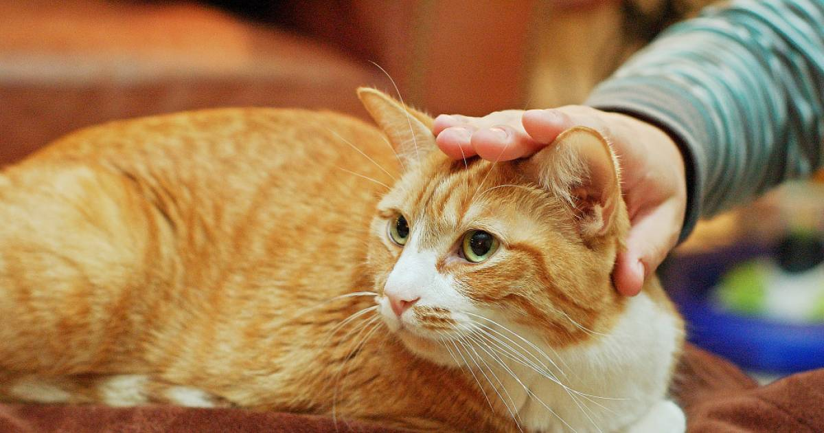 Feline Mind Games: How Our Cats Train Us To Behave