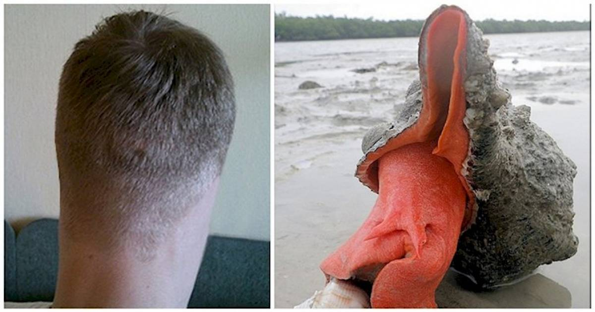15 Pictures That Will Totally Hurt Your Brain