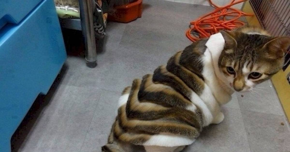 Animals Who Hate Their New Haircut.