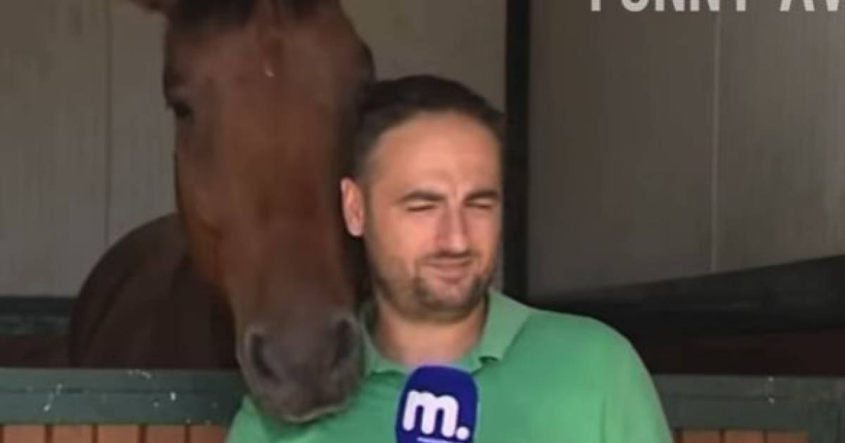 Horse Thoroughly Distracts A Reporter During An Interview