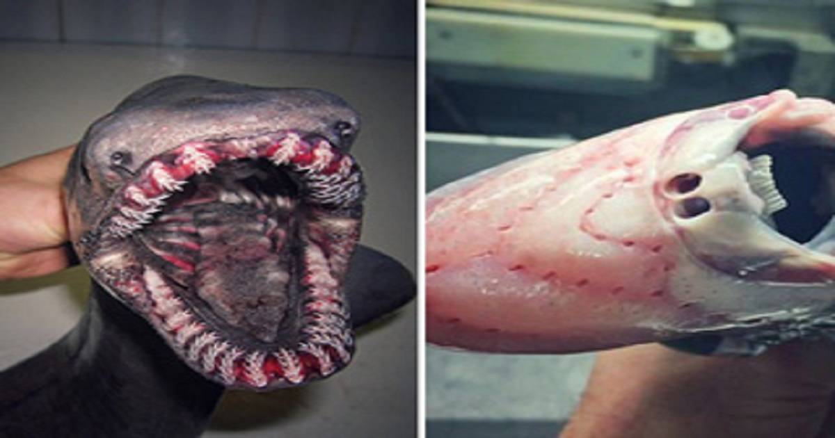 This Fisherman's Twitter Account Is Filled With the TERRIFYING Things He's Caught