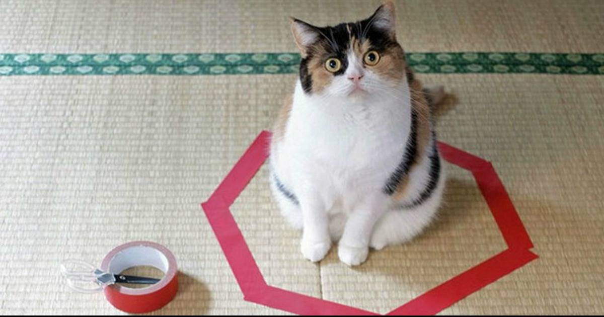 Why The Heck Are Cats Always Drawn To Sitting Inside Circles?