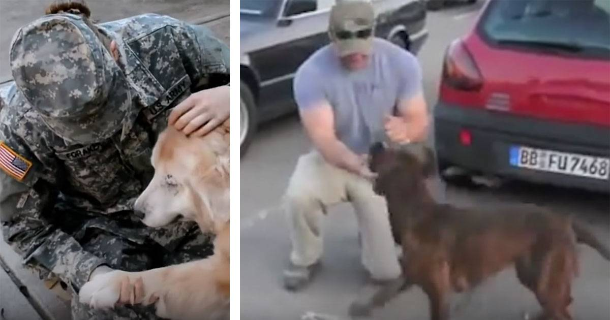 Don't Miss This Heartwarming Video Of Dogs Greeting Their Army Owners After They Return Home