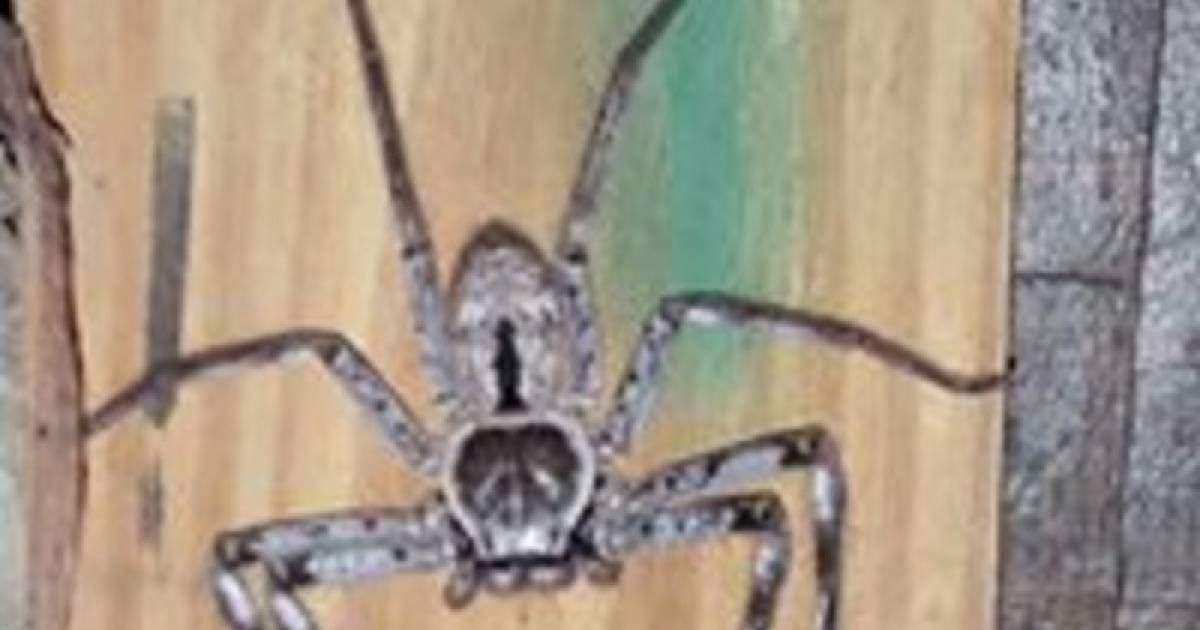 Australian Woman's Foot-Long Spider Infestation Will Make Your Skin Crawl.
