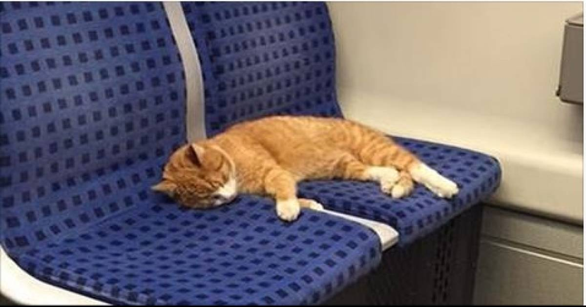 Ginger Cat Saunters Into Subway Train To Take A Nap