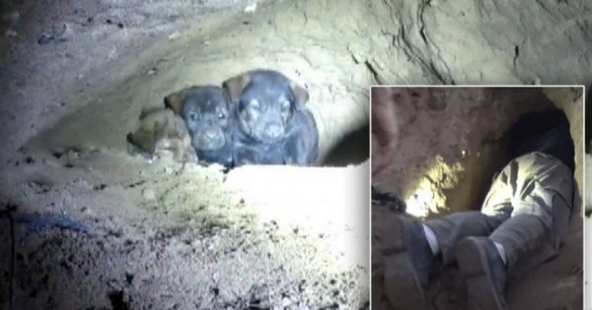 After A Town Hears Cries From Deep Within A Cave, One Man Goes On A Rescue Mission