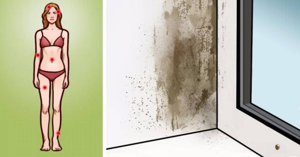 Mold Illness: Signs, Symptoms And What You Need To Know